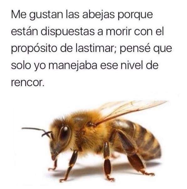 Marcianadas 388 120719001417 (236)