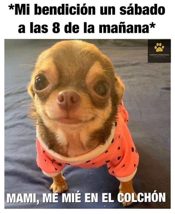 Marcianadas 388 120719001417 (46)