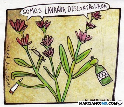 Marcianadas 388 120719001417 (82)