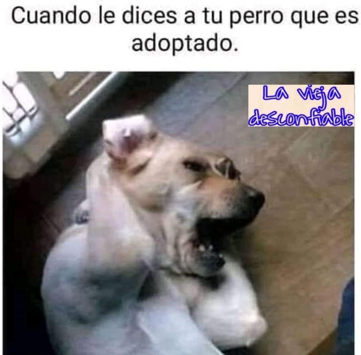 Marcianadas 390 26072019001434 (171)