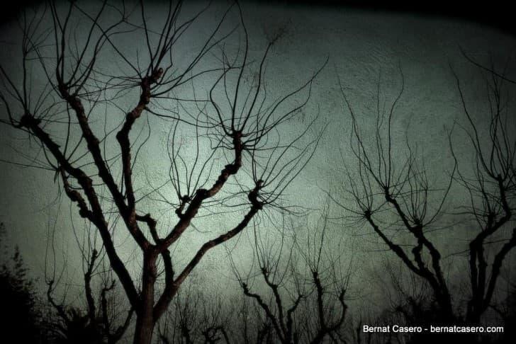 bosque aterrador