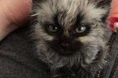 gato con cara malvada