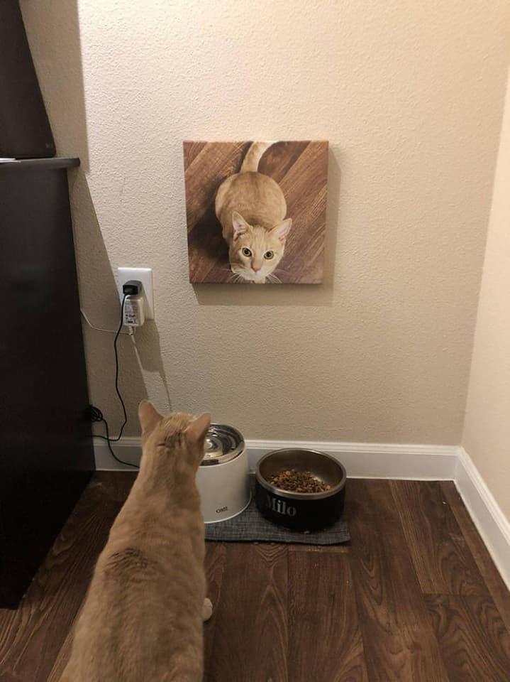 gato viendo su foto