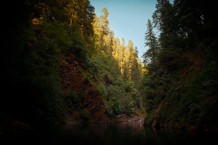 lago en un bosque