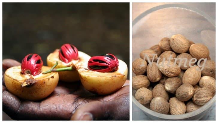 nuez moscada fruta y semilla