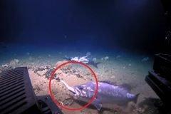 pez mero de roca engullendo tiburon