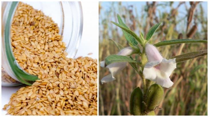 semillas de sesamo o ajonjoli y flor