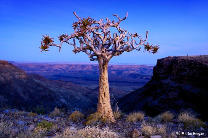 árbol en medio del gran cañon