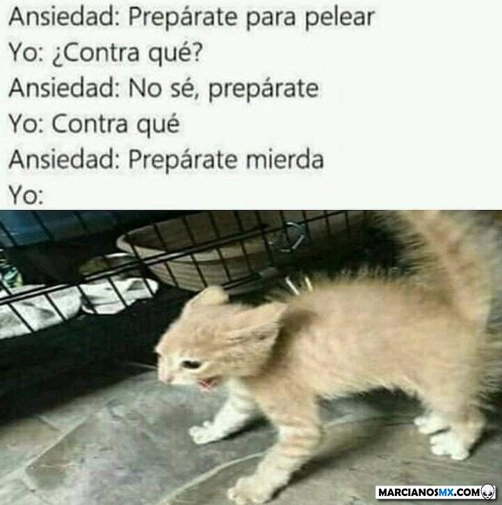 Marcianadas 392 09082019001104 (53)