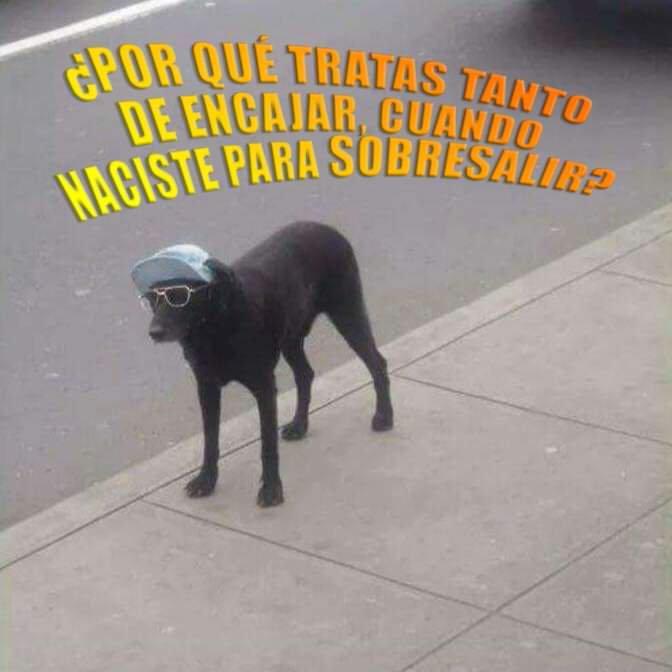 Marcianadas 392 09082019001104 (56)