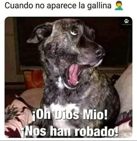 Marcianadas 392 09082019001104 (86)