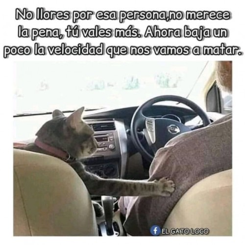 Marcianadas 393 1608201900001257 (322)