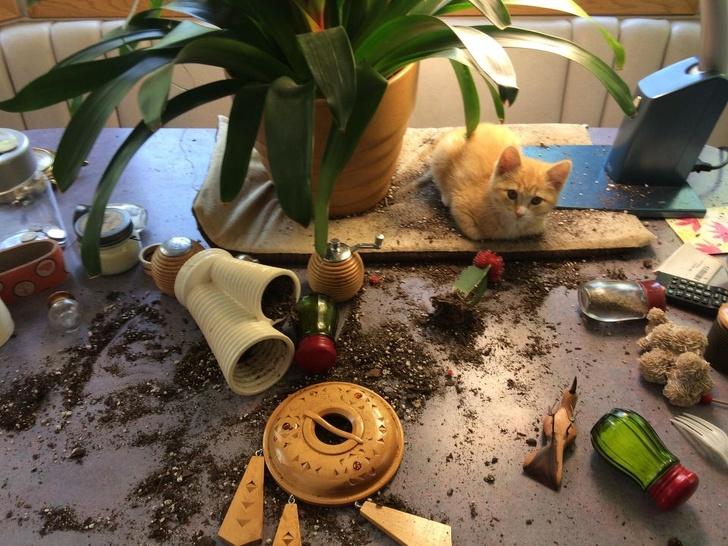 gatos traviesos (11)
