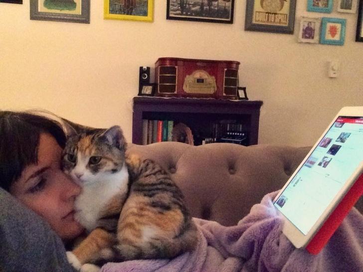 gatos traviesos (12)