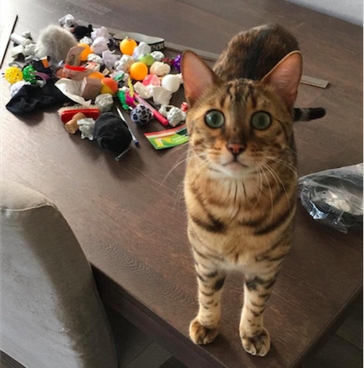 gatos traviesos (14)
