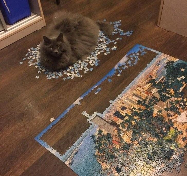 gatos traviesos (15)