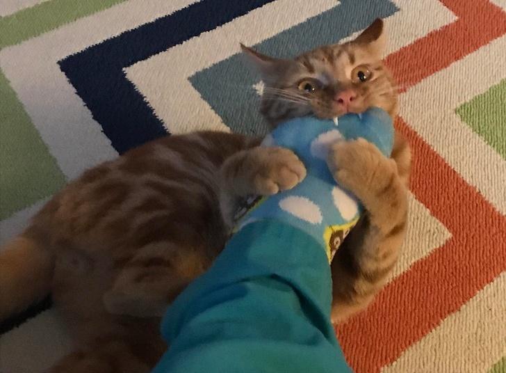 gatos traviesos (2)