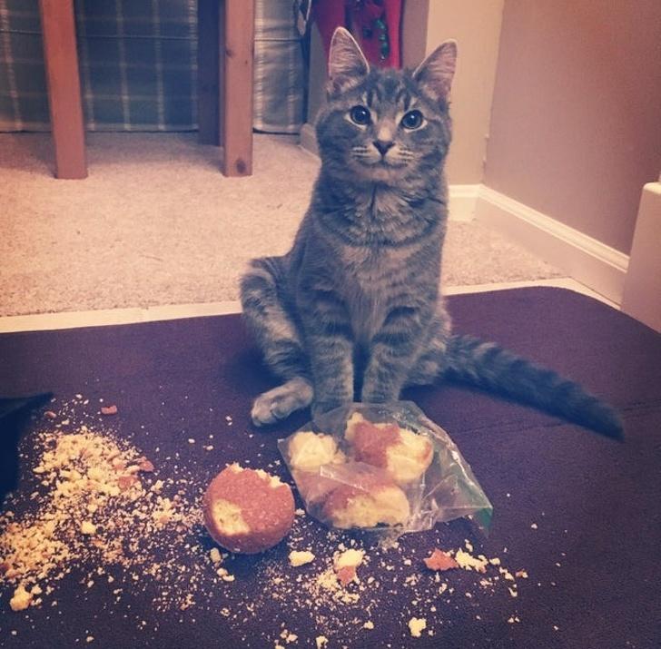 gatos traviesos (20)