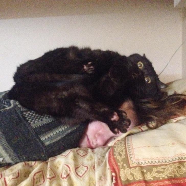 gatos traviesos (6)