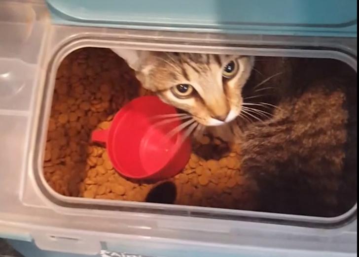gatos traviesos (8)