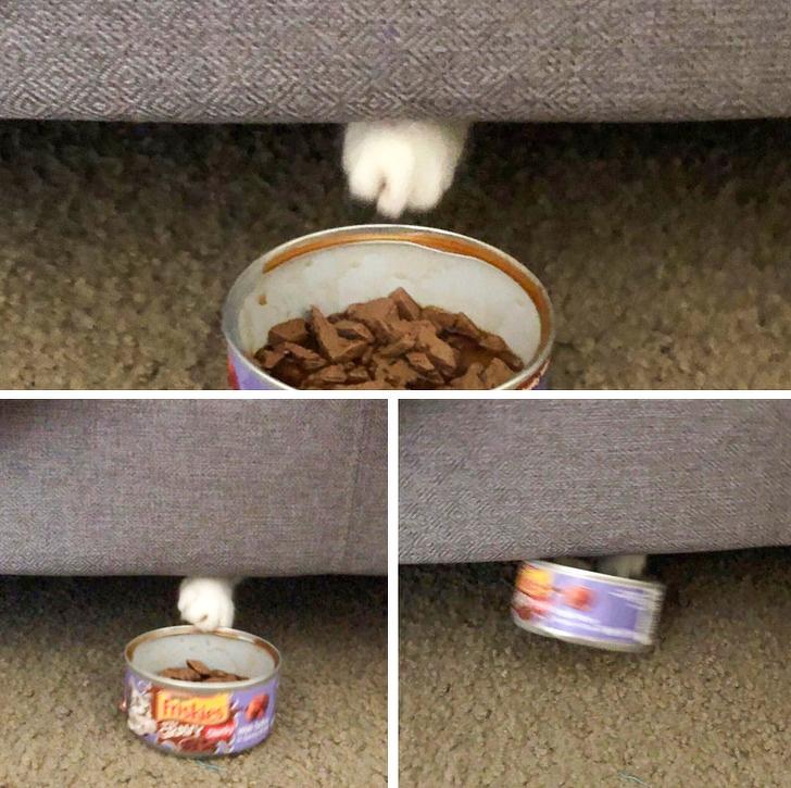 gatos traviesos (9)