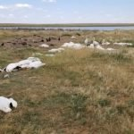 Más de 10 mil pájaros encontrados muertos tras una fuerte granizada