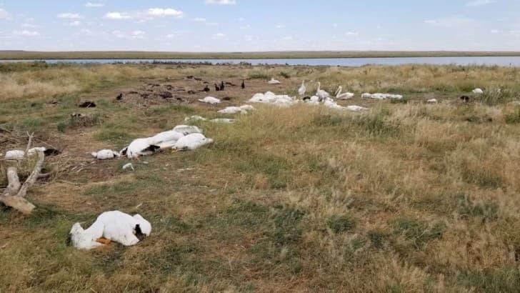 pajaros muertos en montana por granizada