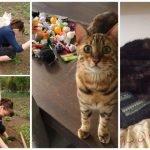20 gatos nominados al título de animal más imprudente del año