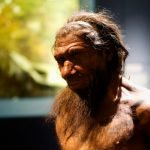 La imagen que tenemos del Neandertal está totalmente equivocada