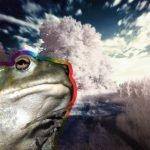 Inhalar secreción psicodélica de un sapo podría hacernos más felices