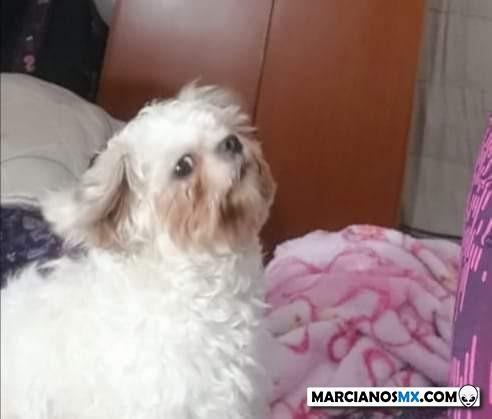 Marcianadas 396 060920191552 (211)