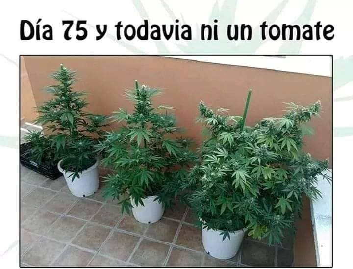 Marcianadas 396 060920191552 (268)