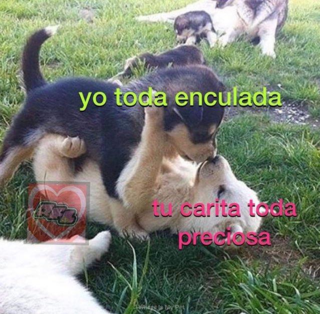 Marcianadas 397 13092019001225 (141)