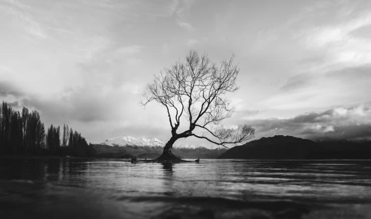 arbol solitario en medio de un lago