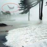 ¿Es real la historia del delfín volador en el huracán Dorian?