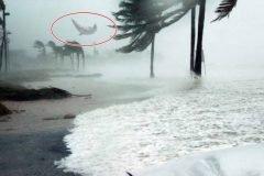 delfin volador