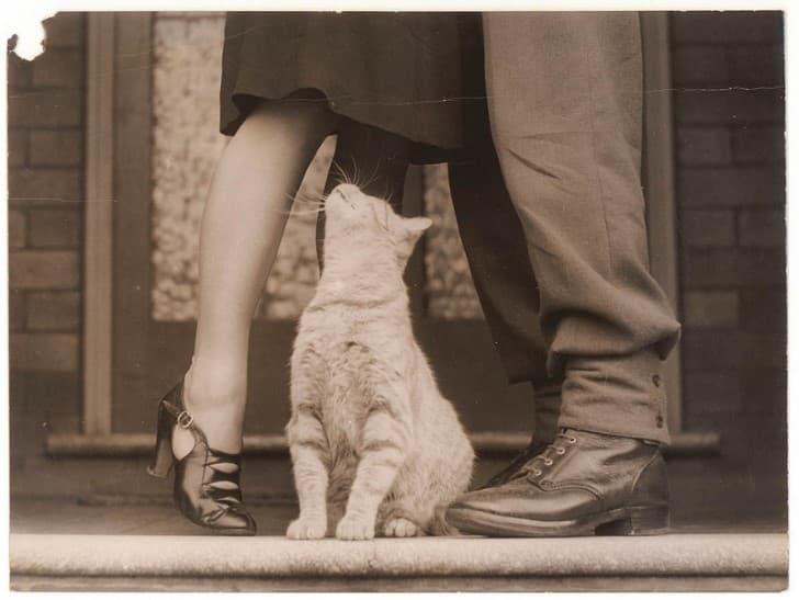 gato en medio de una pareja de enamorados