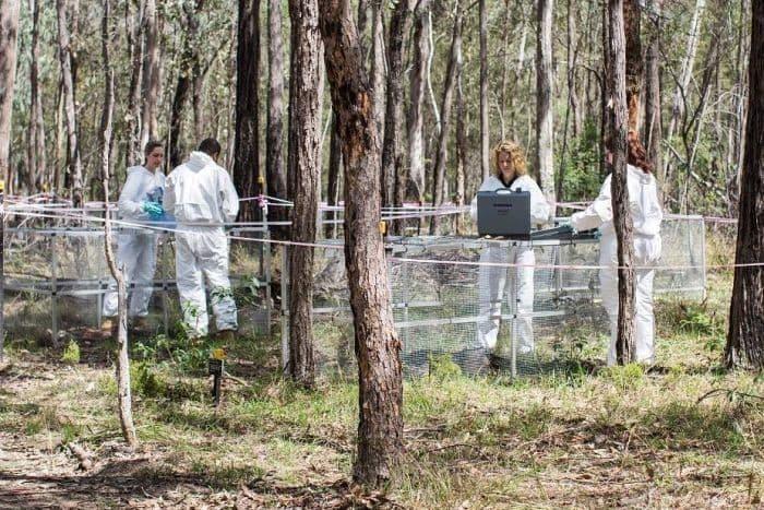 granja de cuerpos en australia