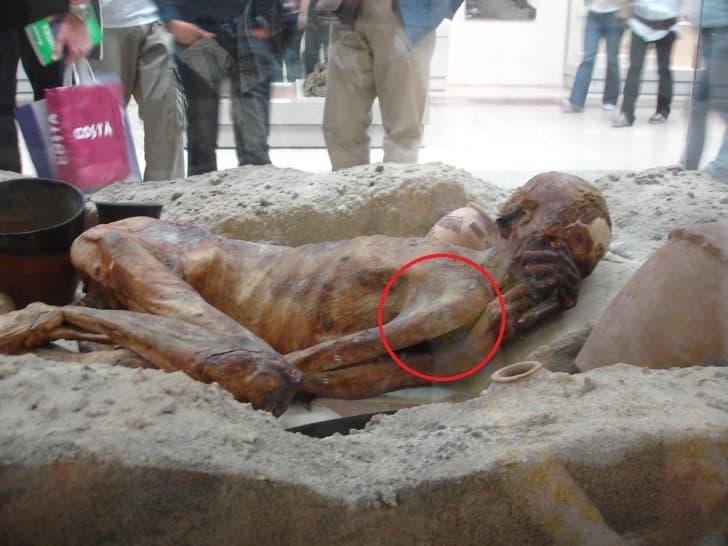 momia en el museo britanico tatuaje mas antiguo
