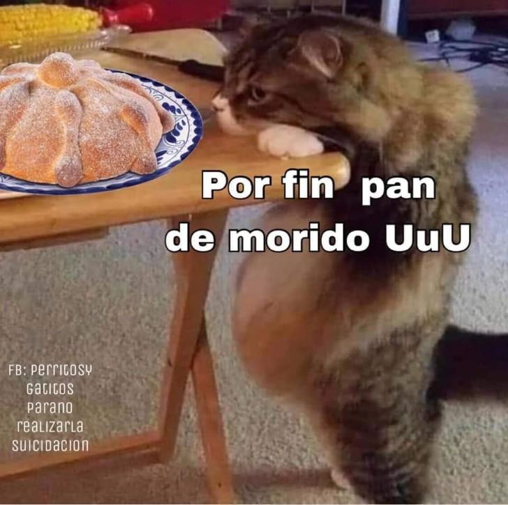Marcianadas 400 04102019 (226)