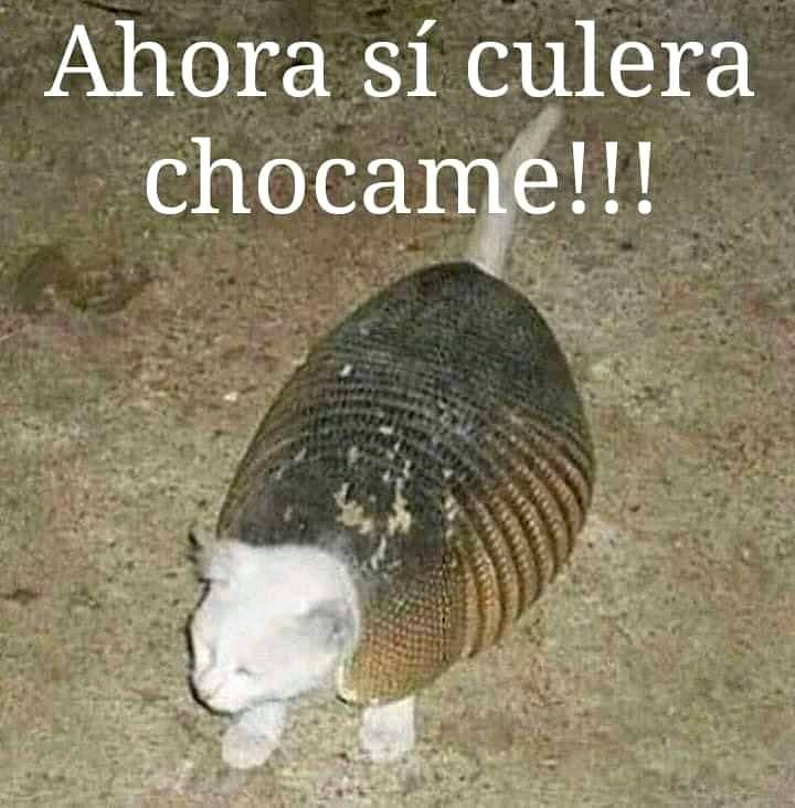 Marcianadas 400 04102019 (282)