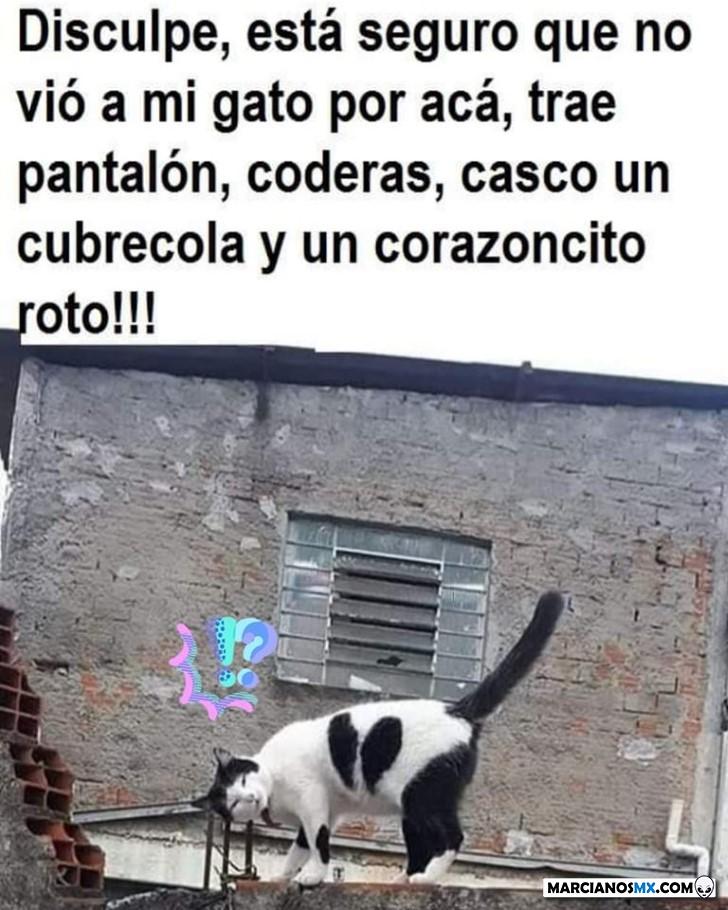 Marcianadas 400 04102019 (308)