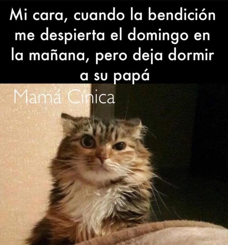 Marcianadas 401 11102019001342 (200)