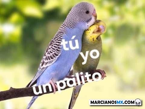 Marcianadas 401 11102019001342 (256)