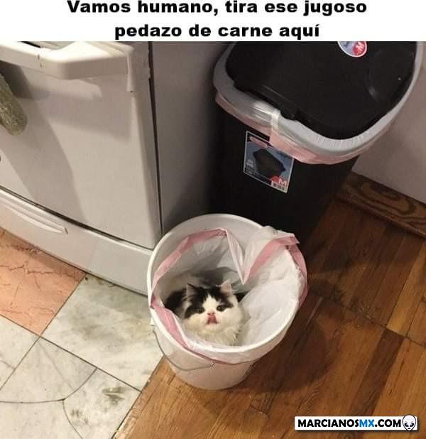 Marcianadas 403 25102019001151 (213)