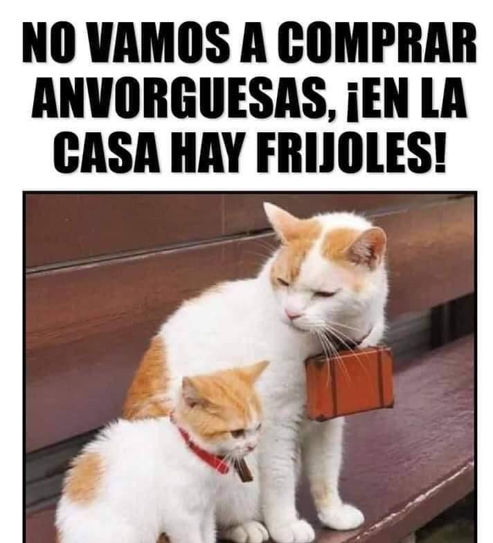Marcianadas 403 25102019001151 (227)