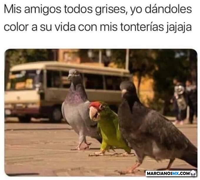 Marcianadas 403 25102019001151 (237)