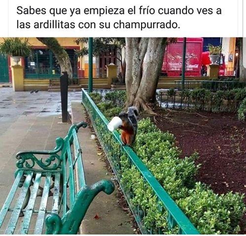 Marcianadas 404 011119001311 (38)