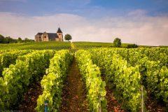 Revueltas de la Champaña: un conflicto por la denominación de origen