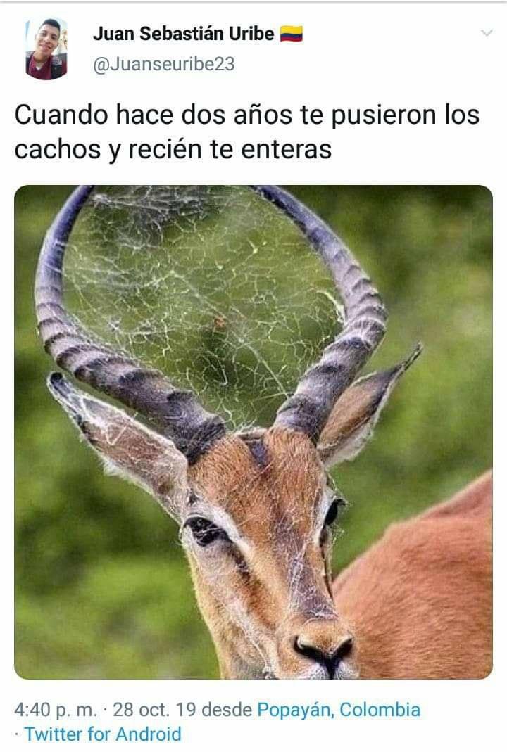 Marcianadas 405 08112019001119 (160)